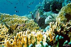 corail[1]